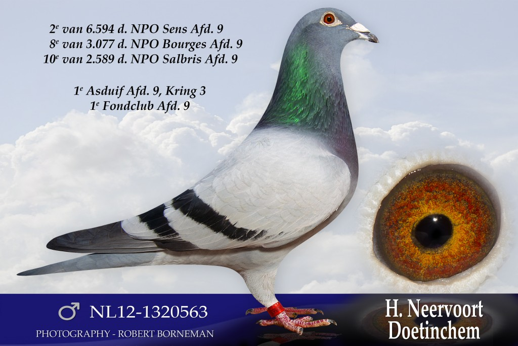 NL12-1320563