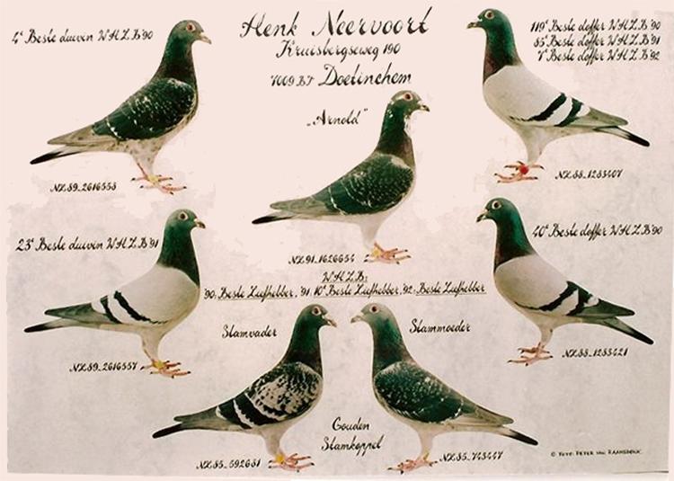 beste-duiven